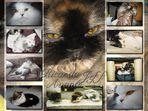 Katzen Poster
