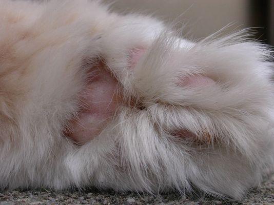 Katzen Pranke