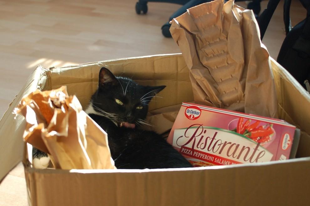 Katzen Ristorante :-)