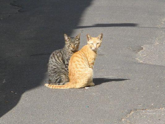 Katzen - Schatten / Sonne