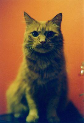 Katzen-Scheich.