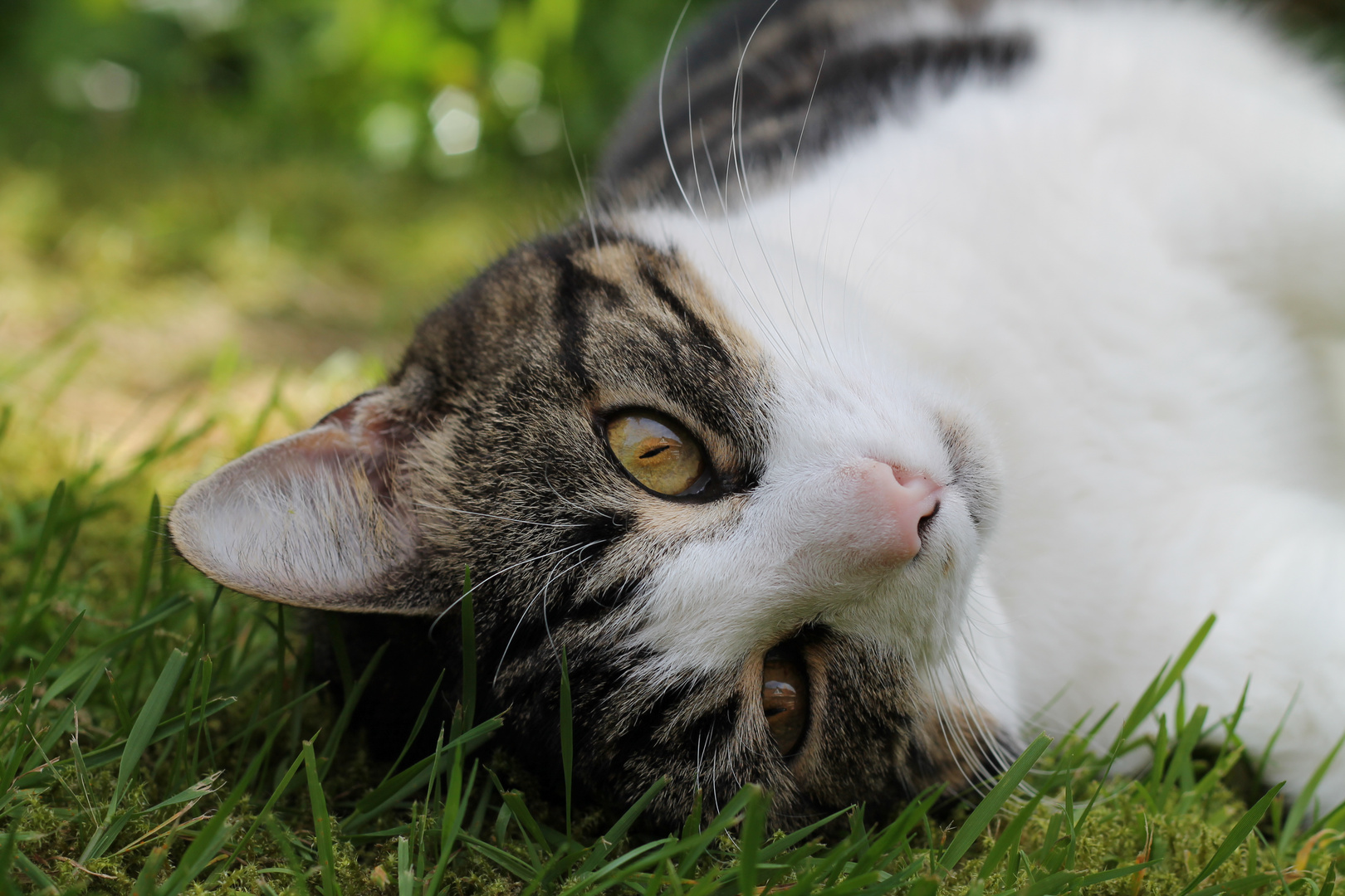 Katzen Traum