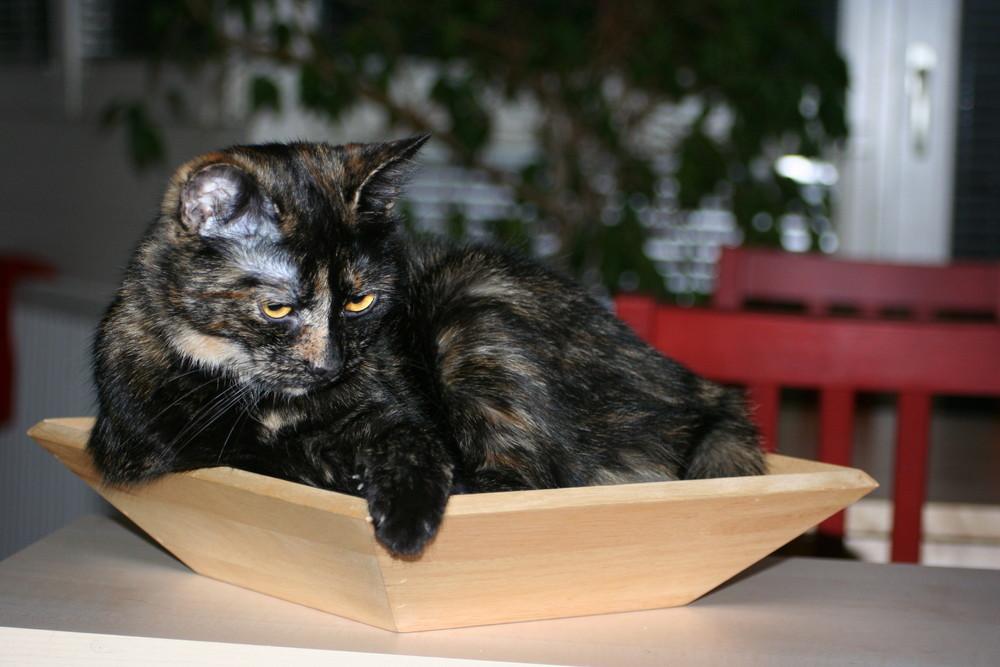 Katzen und ihre Lieblingsplätze...