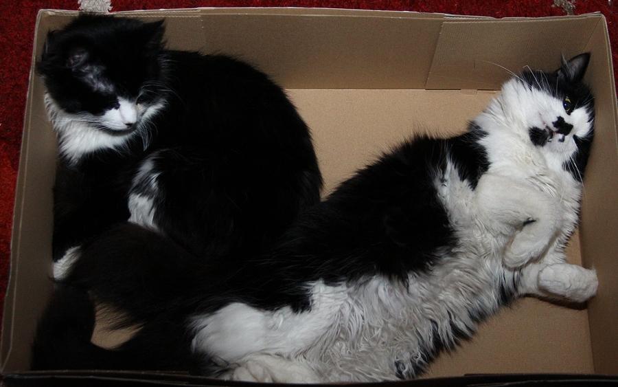 Katzen und Kartons, ...