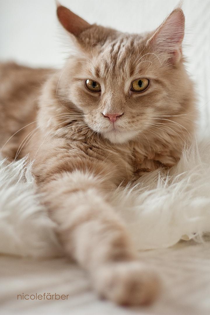 Katzen verzaubern mit Blicken