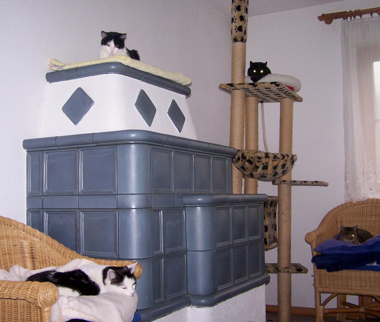 Katzen-WG