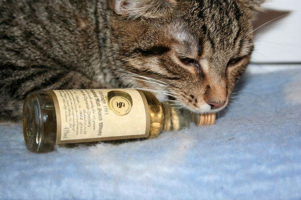 Katzen wollen Whisky saufen