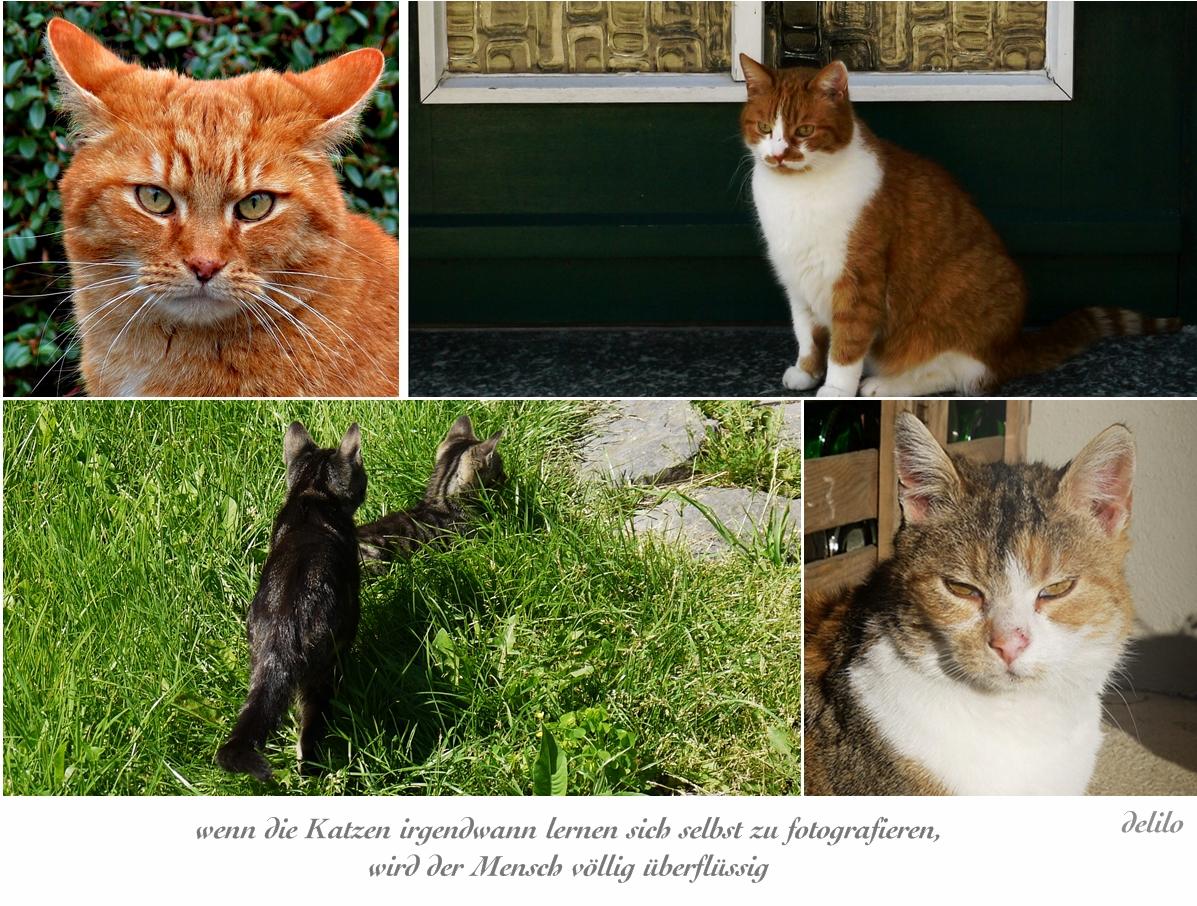 Katzen zum Katzentag