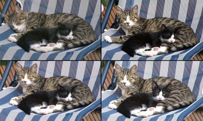 Katzen- Zusammenstellung