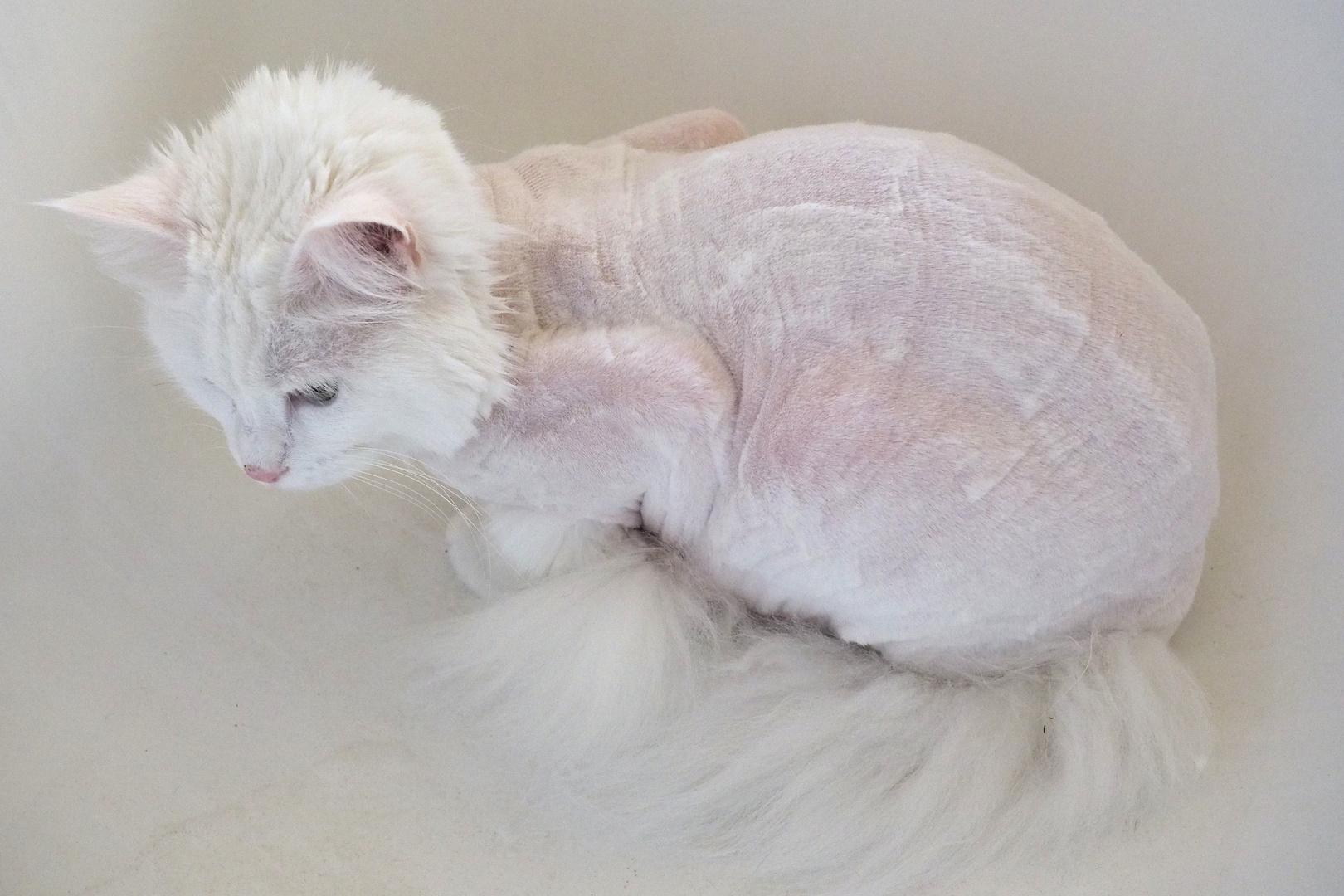 Katze:nakt