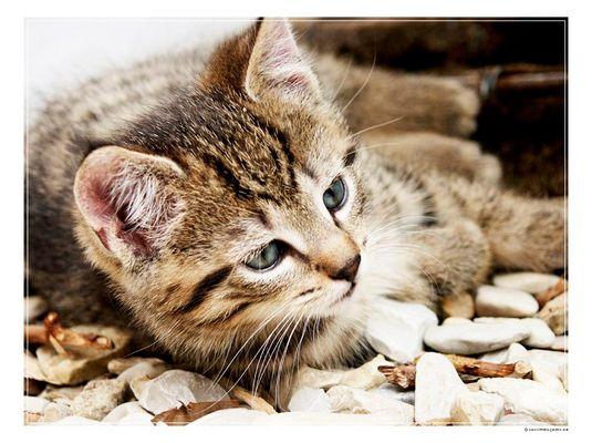 Katzenakt auf Steinen II