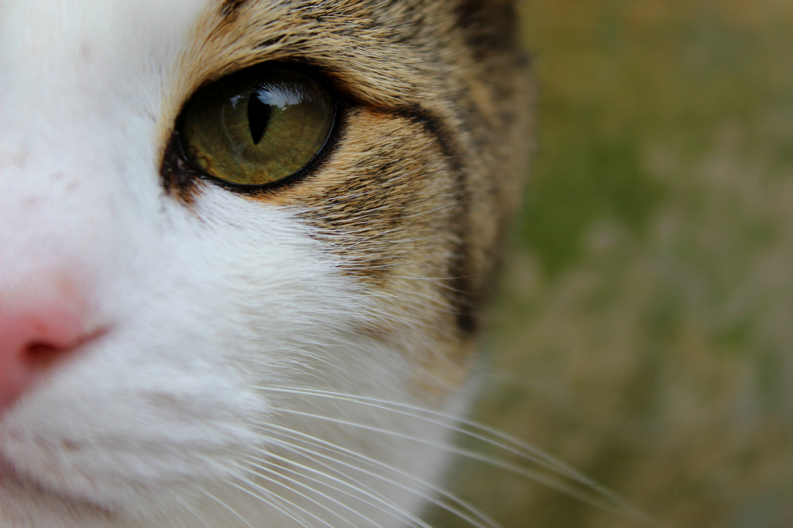 #Katzenauge