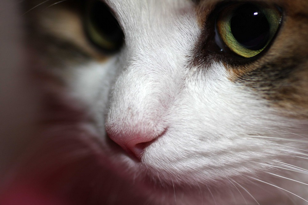 Katzenauge und Katzennase