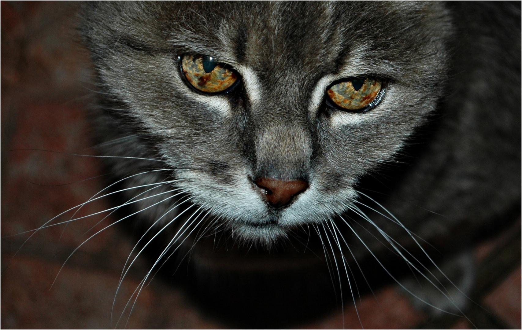Katzenaugen, die nach Leckerlie betteln