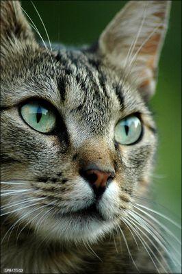 Katzenaugen | Spiegel der Seele