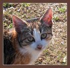 Katzenaugen_Blicke-Bettelblick 6