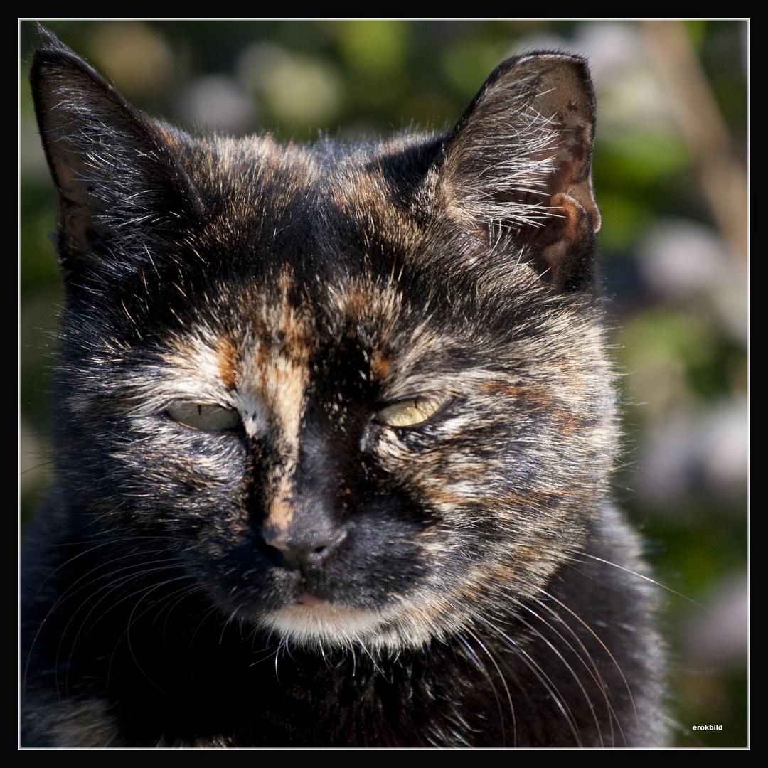 Katzenaugen_Blicke Teil2-Camouflage-Tiger 1