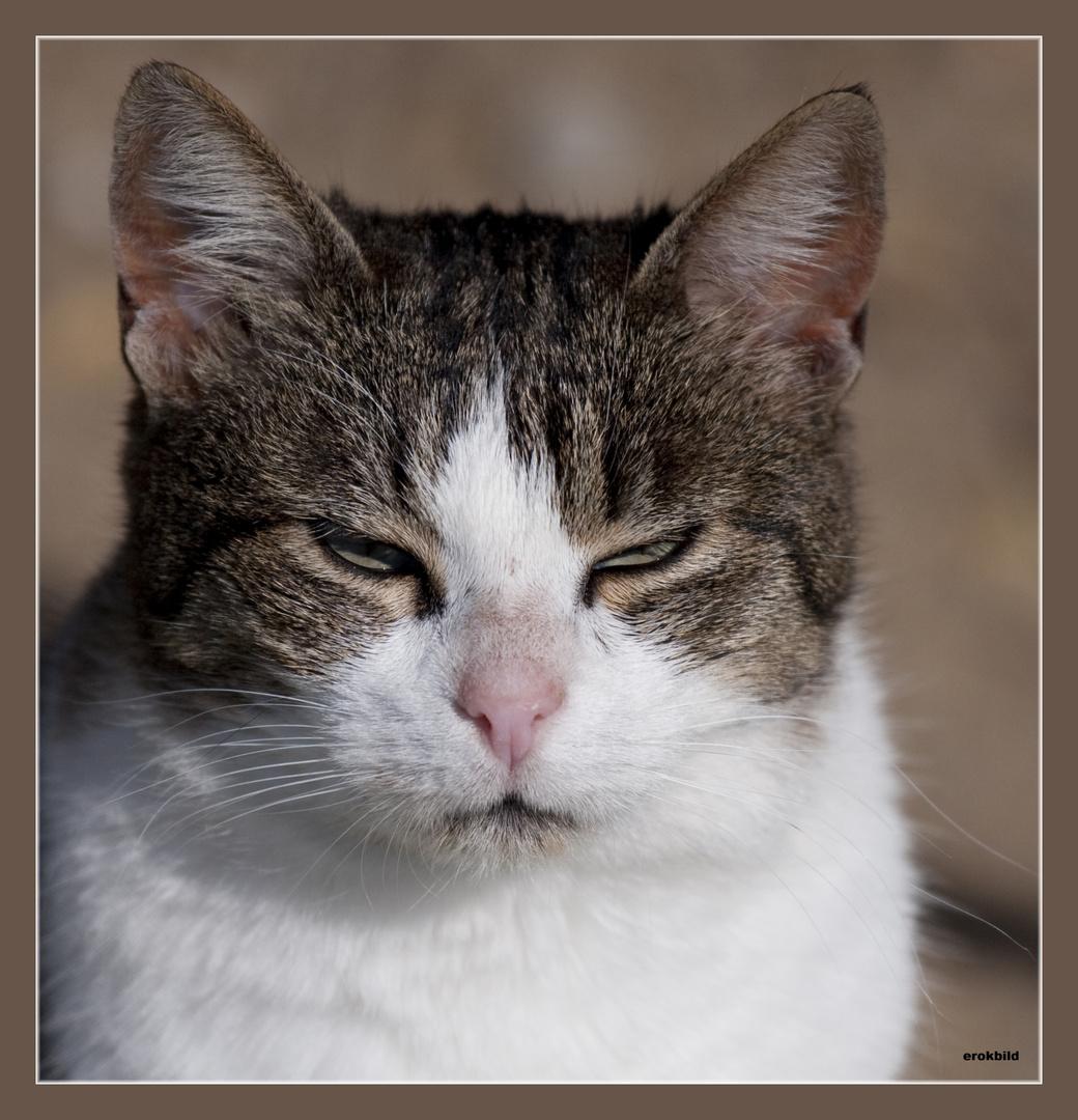 Katzenaugen_Blicke Teil2-schlechte Laune3