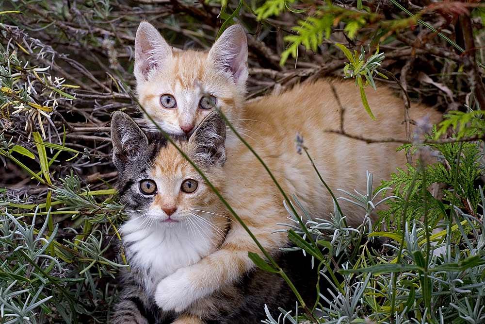 Katzenbabies 1