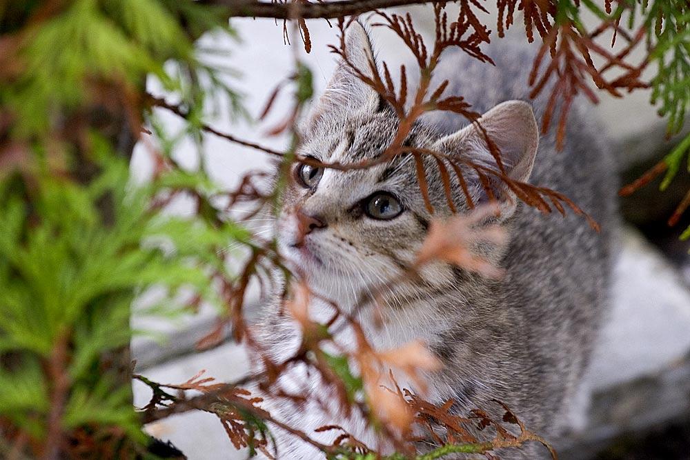 Katzenbabies 2
