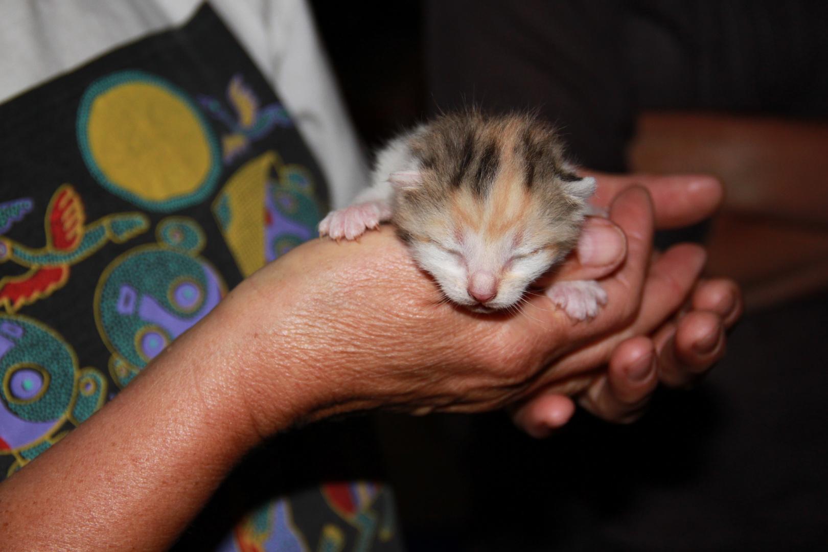 Katzenbaby in Menschenhand