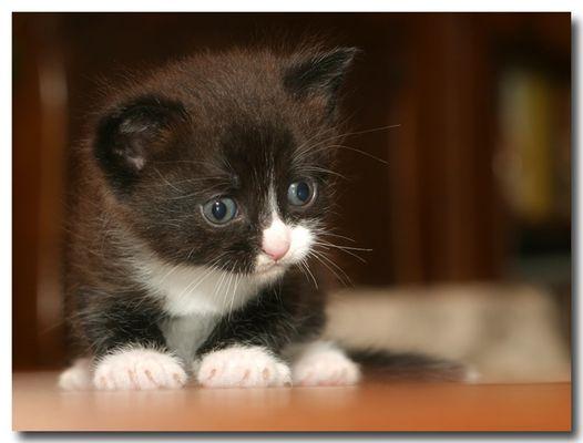 Katzenbaby Nr.zwo...