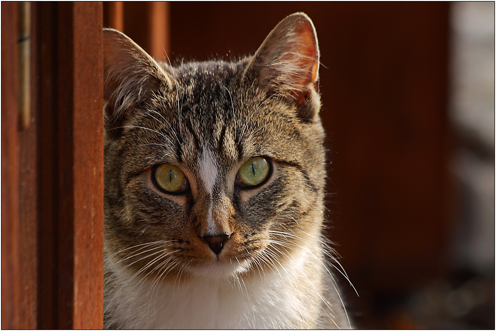Katzenblick