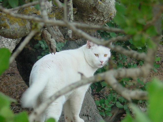 Katzenblick, vergroessert