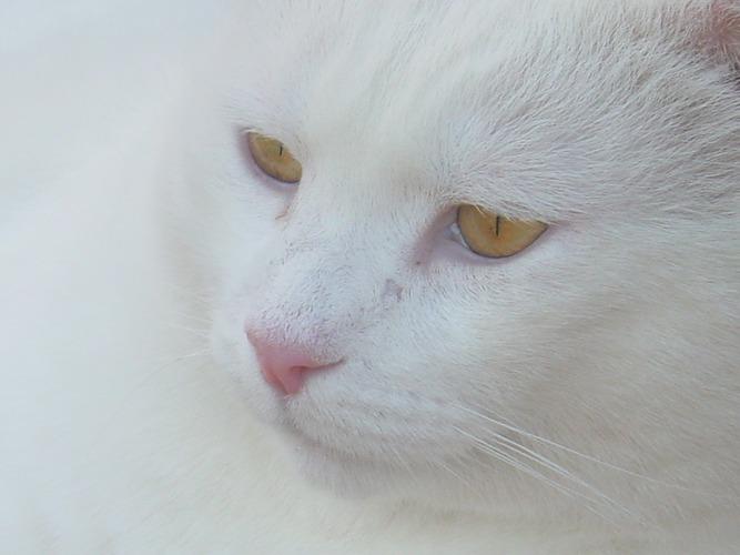 Katzenblick1, vergroessert