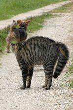 Katzenbuckel 2