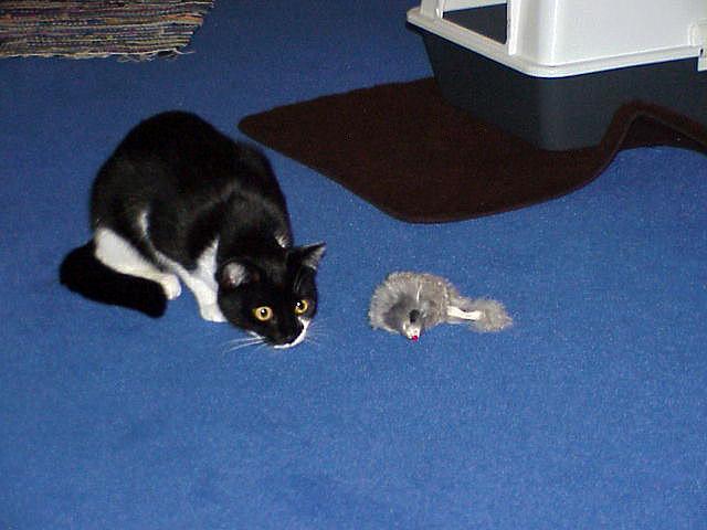 """Katzendame """"Pebbles"""" 1999"""