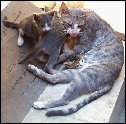 Katzenfamilie in Kairo #1