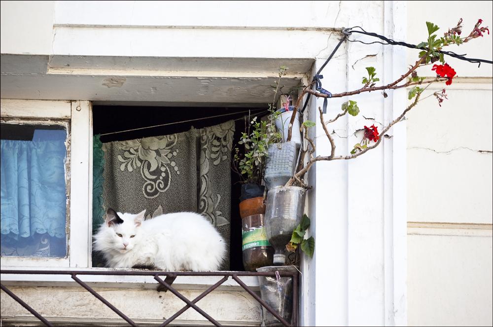 Katzenfenster 1 ...