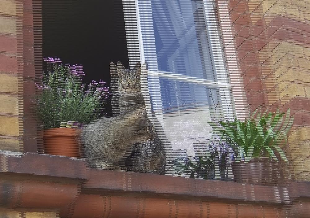 Katzenfenster 1 (3D)
