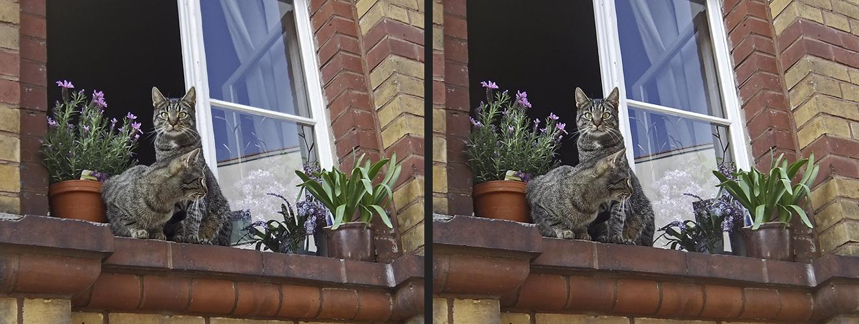 Katzenfenster 1 (X-Blick 3D)