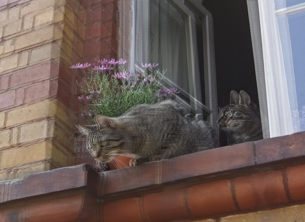 Katzenfenster 2 (3D)