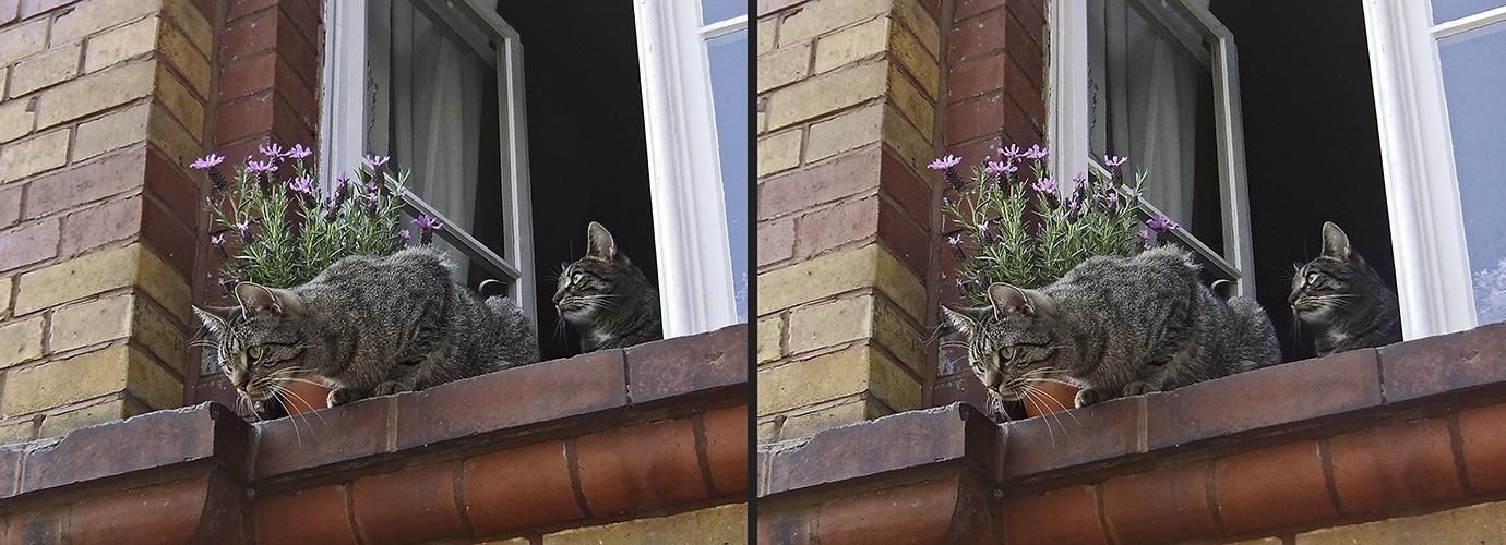 Katzenfenster 2 (X-Blick 3D)