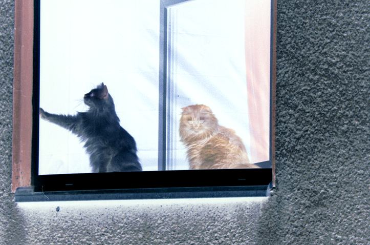 Katzenfenster