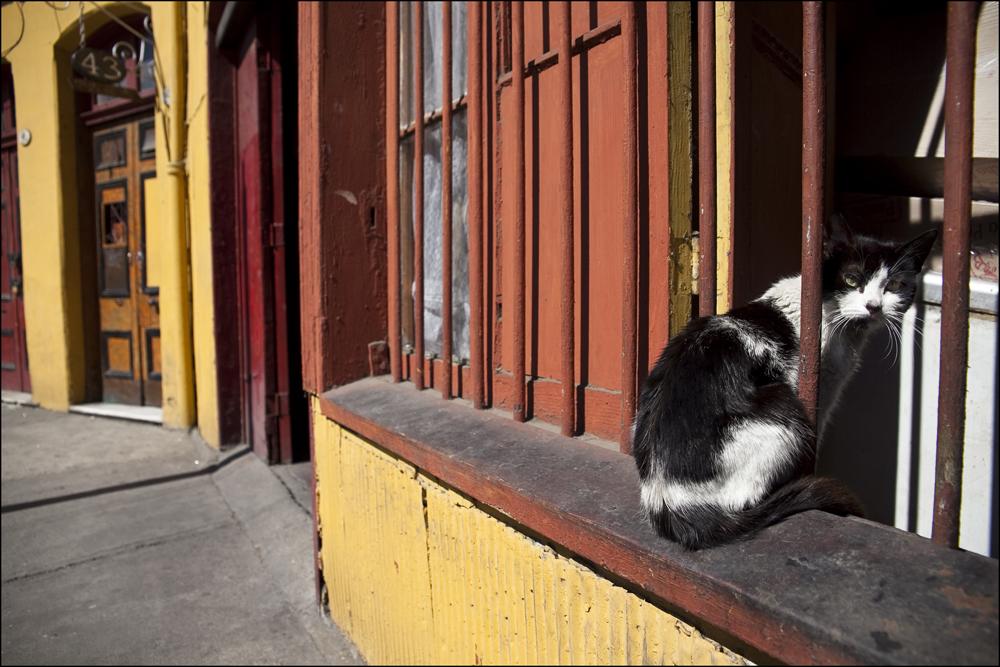 Katzenfenster ...