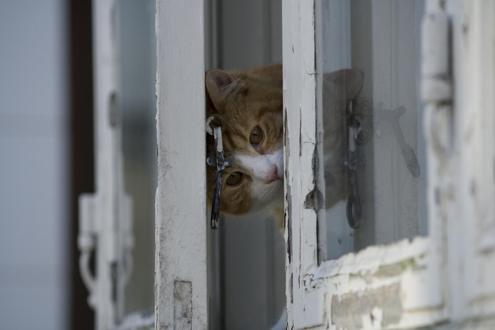 Katzenfenster - Fensterkatze
