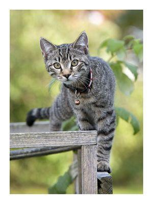 Katzenfoto Nr. 545.146.468.322
