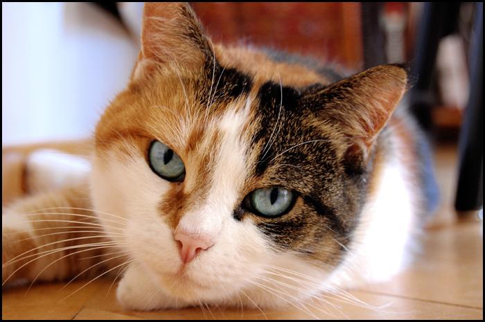 Katzenfotos sind langweilig...