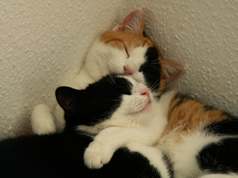 Katzenfreundschaft