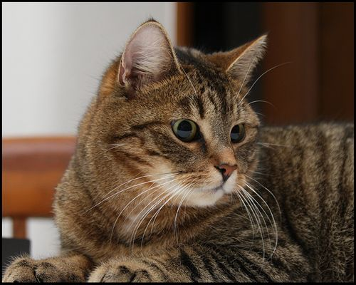 Katzengedanken