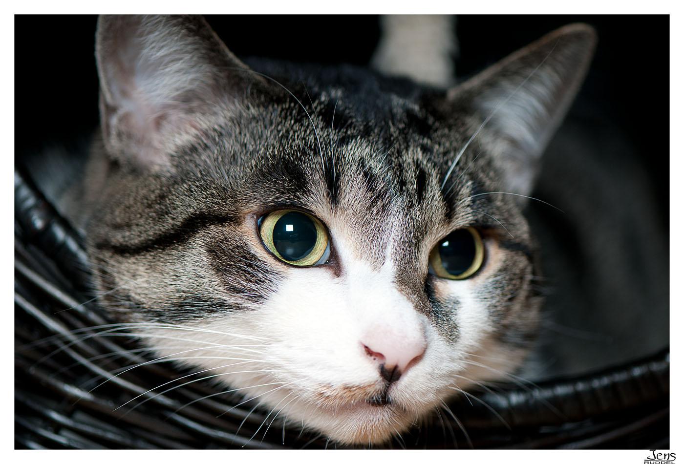 Katzengeflüster