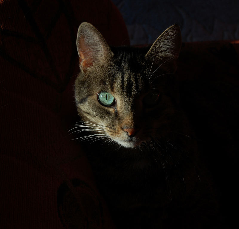 Katzengeheimnis