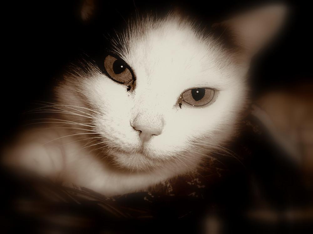 Katzengesicht