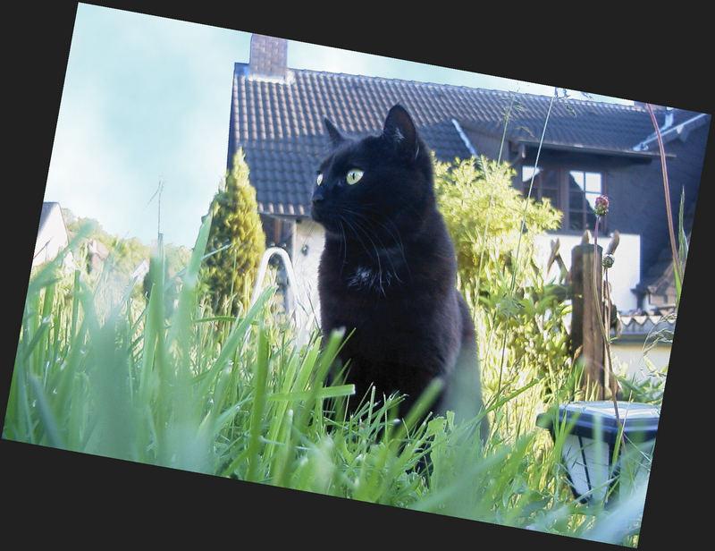 Katzengras [2]