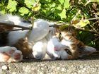 Katzenherbst...