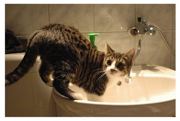 Katzenhygiene